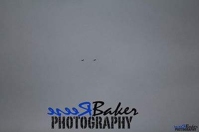 2013 Ballad Co ~ Simba_0043