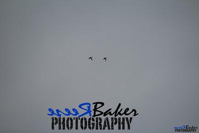 2013 Ballad Co ~ Simba_0025