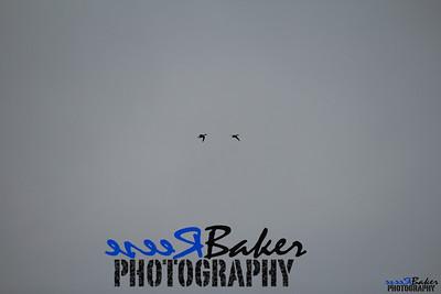 2013 Ballad Co ~ Simba_0024