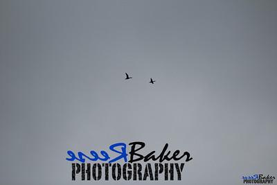 2013 Ballad Co ~ Simba_0031