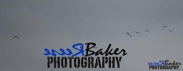 2013 Ballad Co ~ Simba_0010