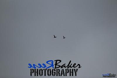 2013 Ballad Co ~ Simba_0028