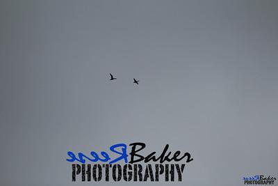 2013 Ballad Co ~ Simba_0029
