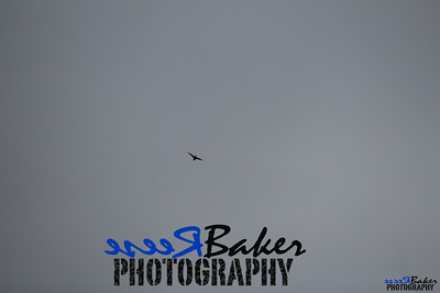 2013 Ballad Co ~ Simba_0048