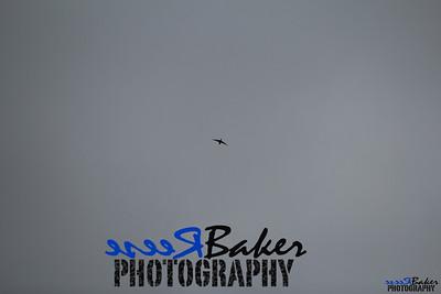 2013 Ballad Co ~ Simba_0046
