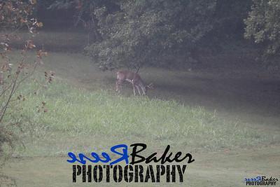 2013 Wildlife_0281