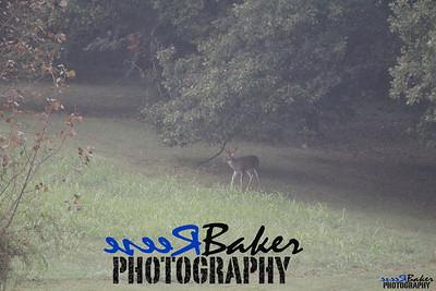 2013 Wildlife_0287
