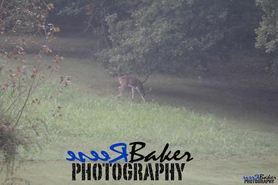 2013 Wildlife_0274