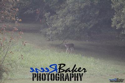 2013 Wildlife_0288