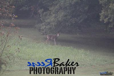 2013 Wildlife_0279
