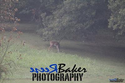2013 Wildlife_0275