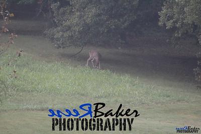 2013 Wildlife_0286
