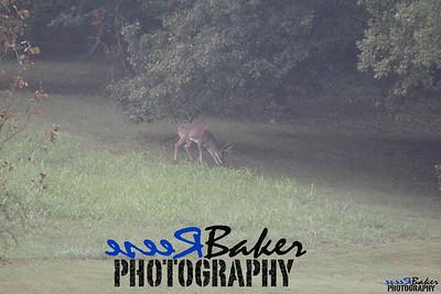 2013 Wildlife_0285
