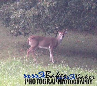 2013 Wildlife_0277