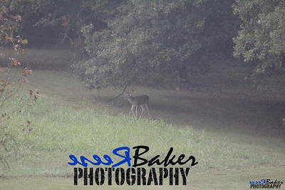 2013 Wildlife_0289
