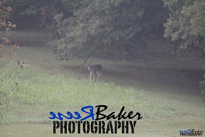 2013 Wildlife_0290