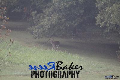 2013 Wildlife_0293