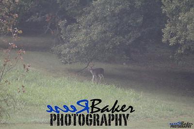 2013 Wildlife_0291