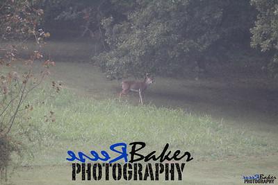 2013 Wildlife_0278