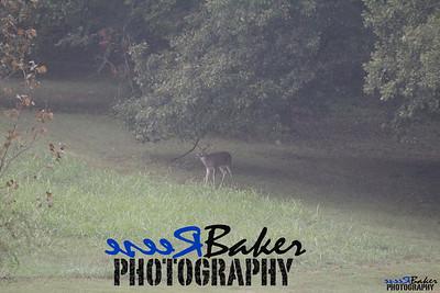 2013 Wildlife_0292