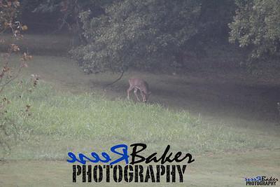 2013 Wildlife_0283