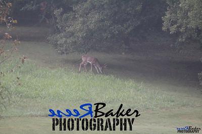 2013 Wildlife_0284