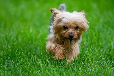 Hoyt Doggie Visit
