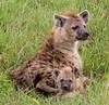 Ngorogoro Crater, Hyena