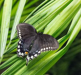 2014 SMM butterflies