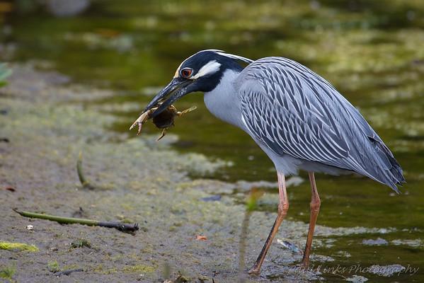 2014 Spring Birding Trip