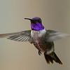 Hybrid Hummingbird