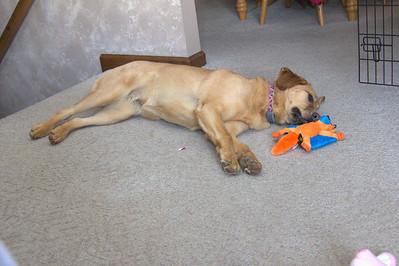 Just a little dog nap.