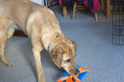 Poly with her birthday present.