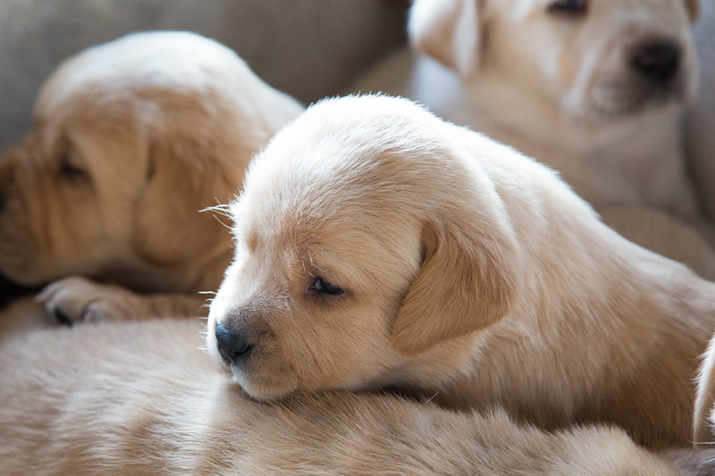 amo151105-Pups-0092.jpg
