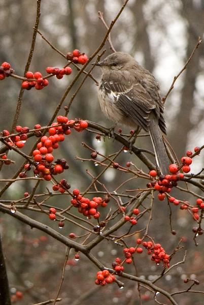 2015 Bird watching
