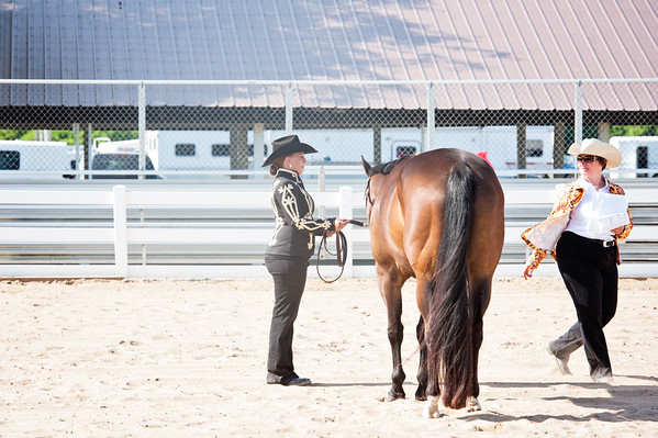 2016 Horse show Alma Fairgrounds