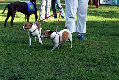 2016 Volusia Co Bark For Life (29)