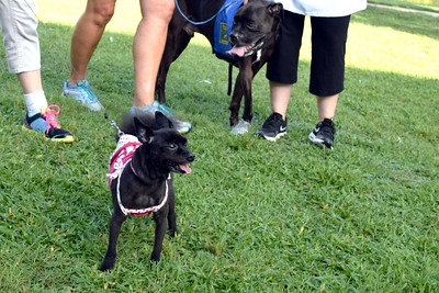 2016 Volusia Co Bark For Life (25)
