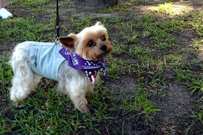 2016 Volusia Co Bark For Life (10)