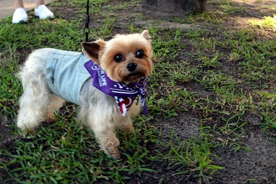 2016 Volusia Co Bark For Life (9)