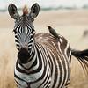 Zebra and Bird_DSC1926