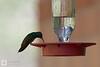 birds-DSC_1223
