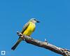 birds-DSC_1361