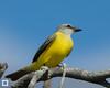 birds-DSC_1381