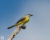 birds-DSC_1368