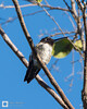 birds-DSC_1423