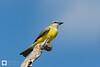 birds-DSC_1374