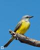 birds-DSC_1366