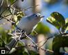 birds-DSC_1409