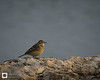 birds-DSC_1482